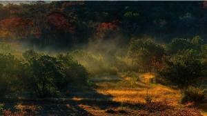 Mist Lifting off Cedars / dj @ oxherder arts / CC BY-NC-SA
